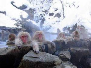 airasia online booking bangkok to japan-jigokudani monkey park